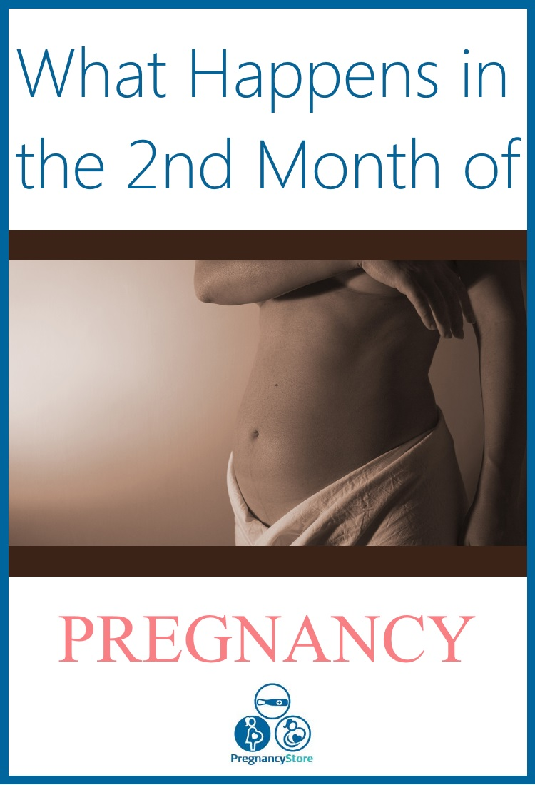 what happens in the second month of pregnancy